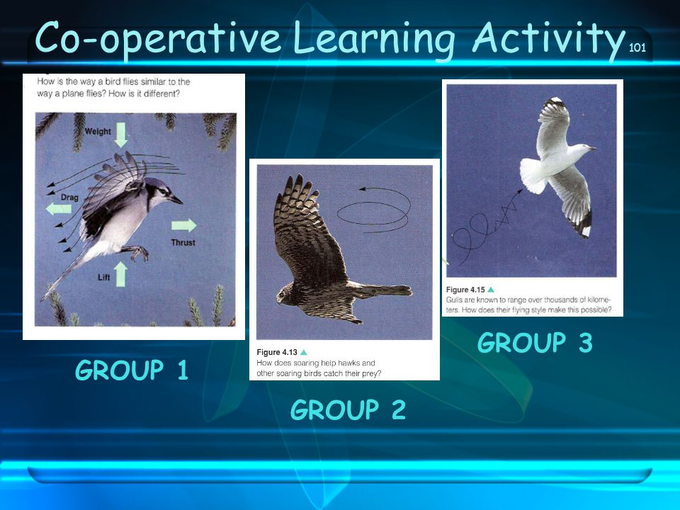 Co-operative Learning Activity 101
