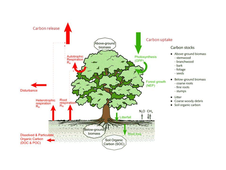 Carbon release Carbon uptake