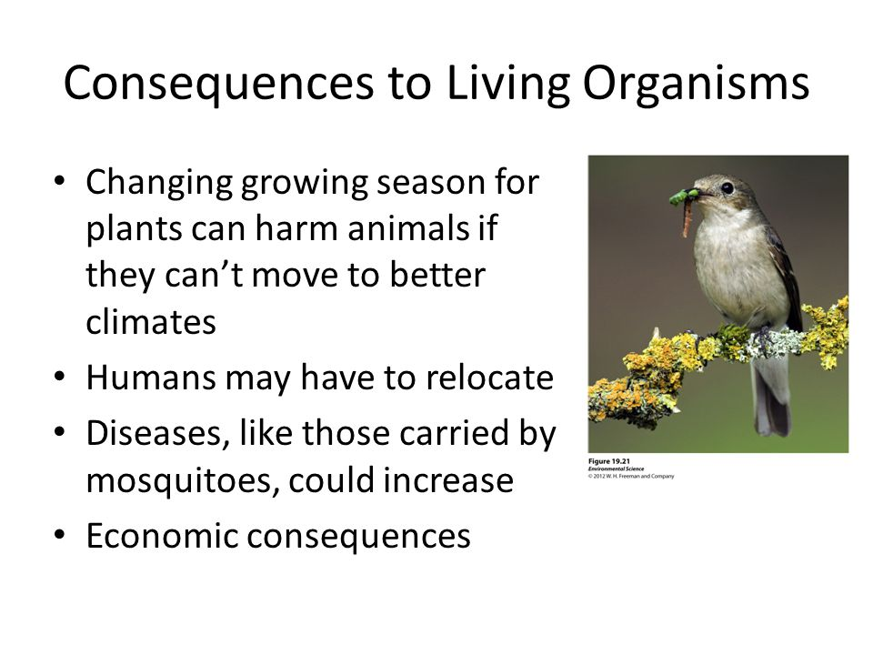 Consequences to Living Organisms