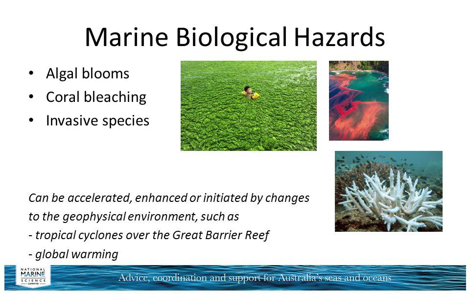 Marine Biological Hazards