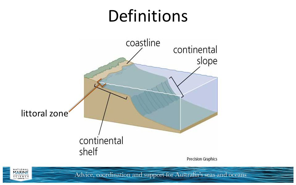 Definitions littoral zone