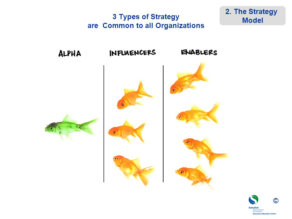 3 Types of Strategy are Common to all Organizations