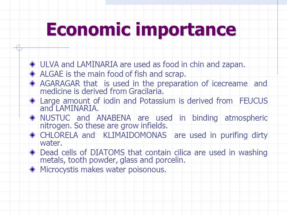Economic importance ULVA and LAMINARIA are used as food in chin and zapan. ALGAE is the main food of fish and scrap.