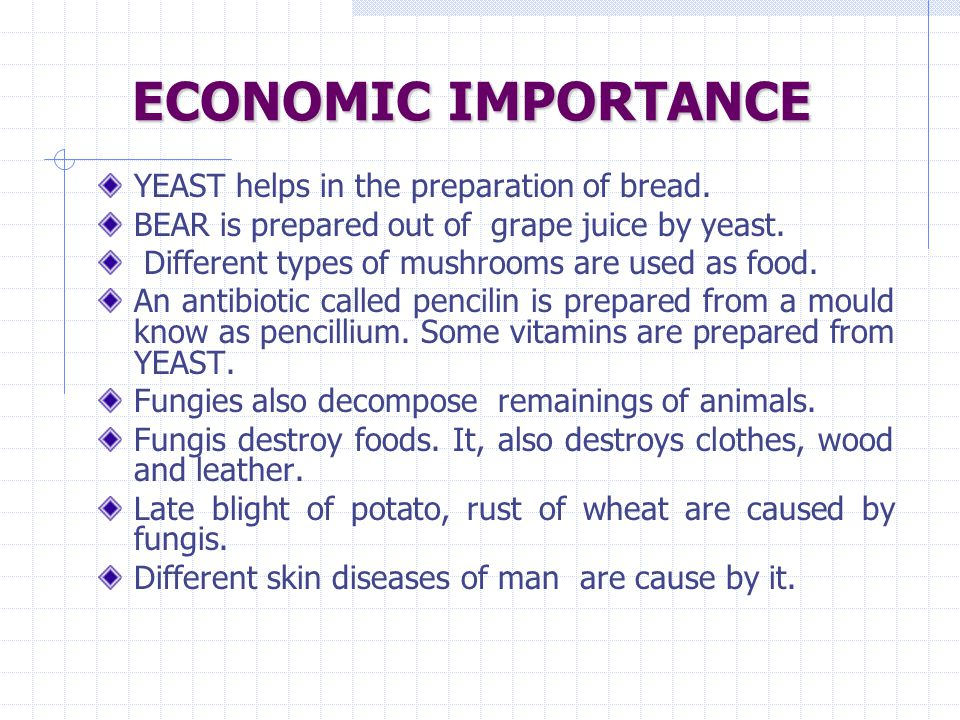 ECONOMIC IMPORTANCE YEAST helps in the preparation of bread.