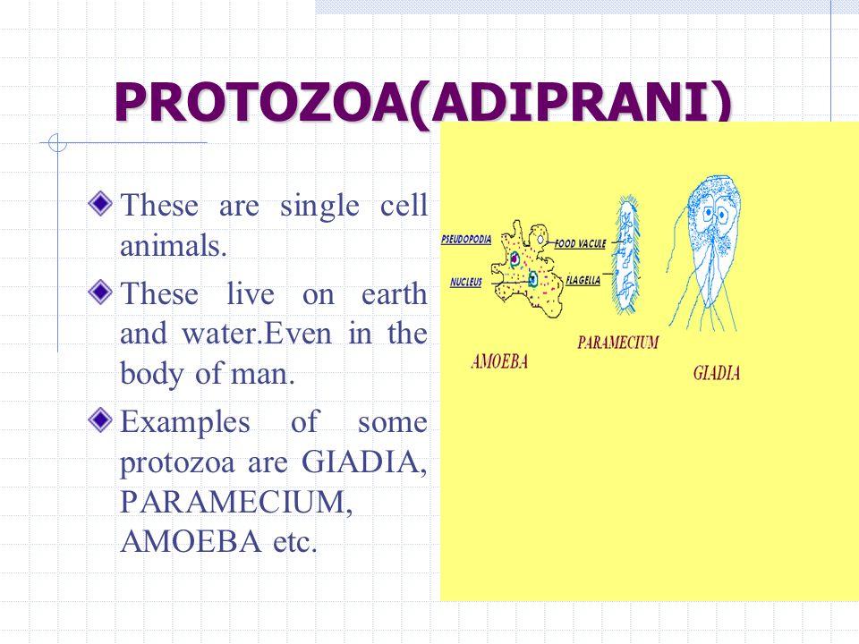 PROTOZOA(ADIPRANI) These are single cell animals.