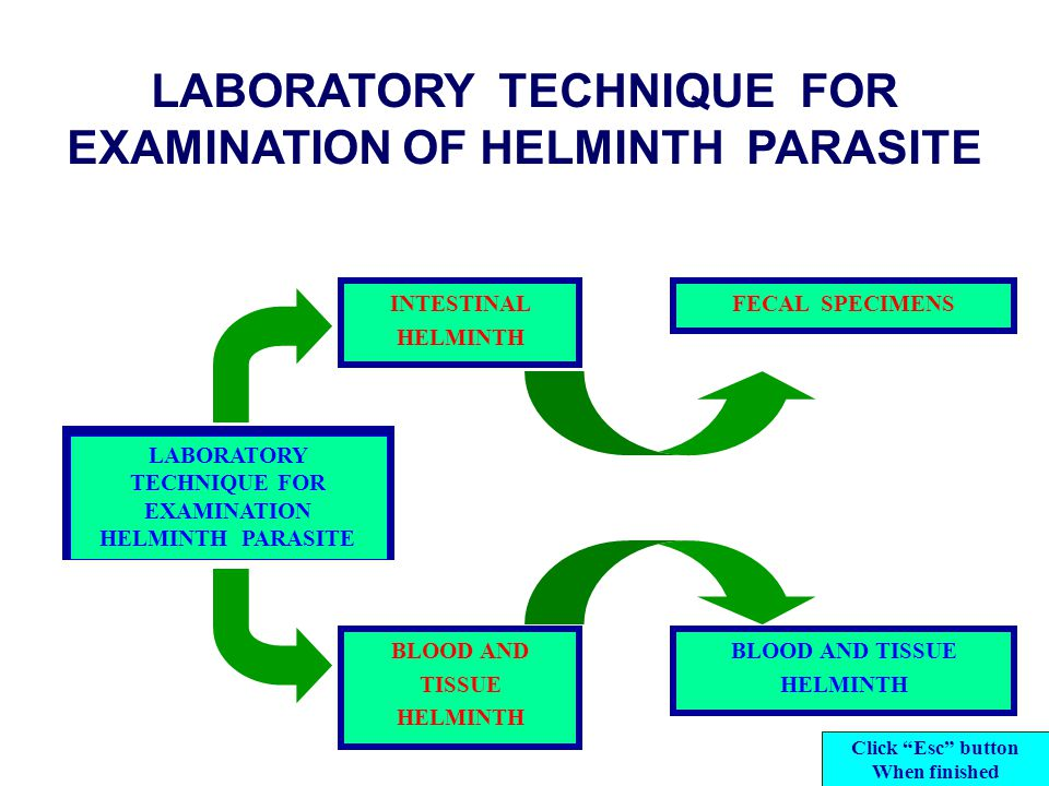 LABORATORY TECHNIQUE FOR EXAMINATION OF HELMINTH PARASITE