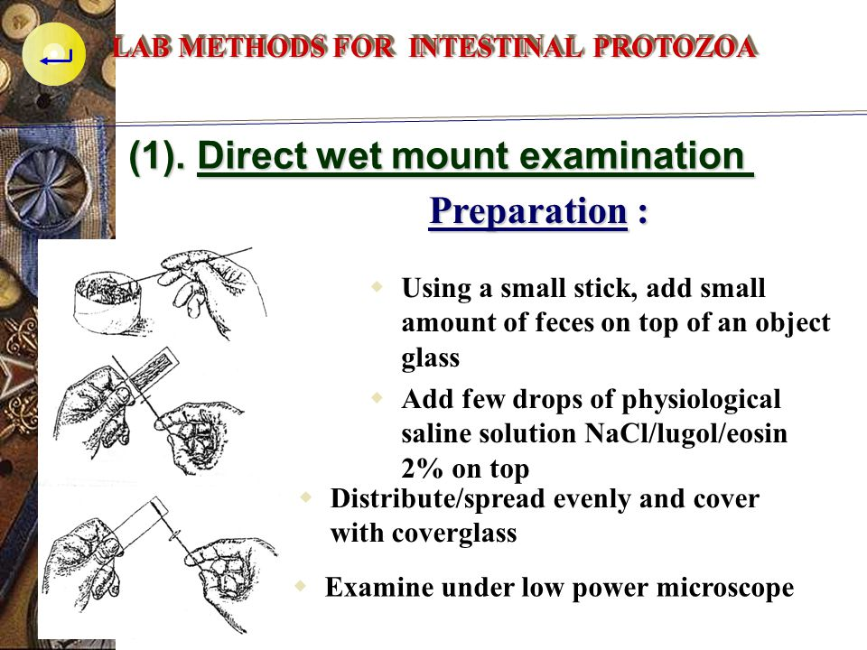 (1). Direct wet mount examination