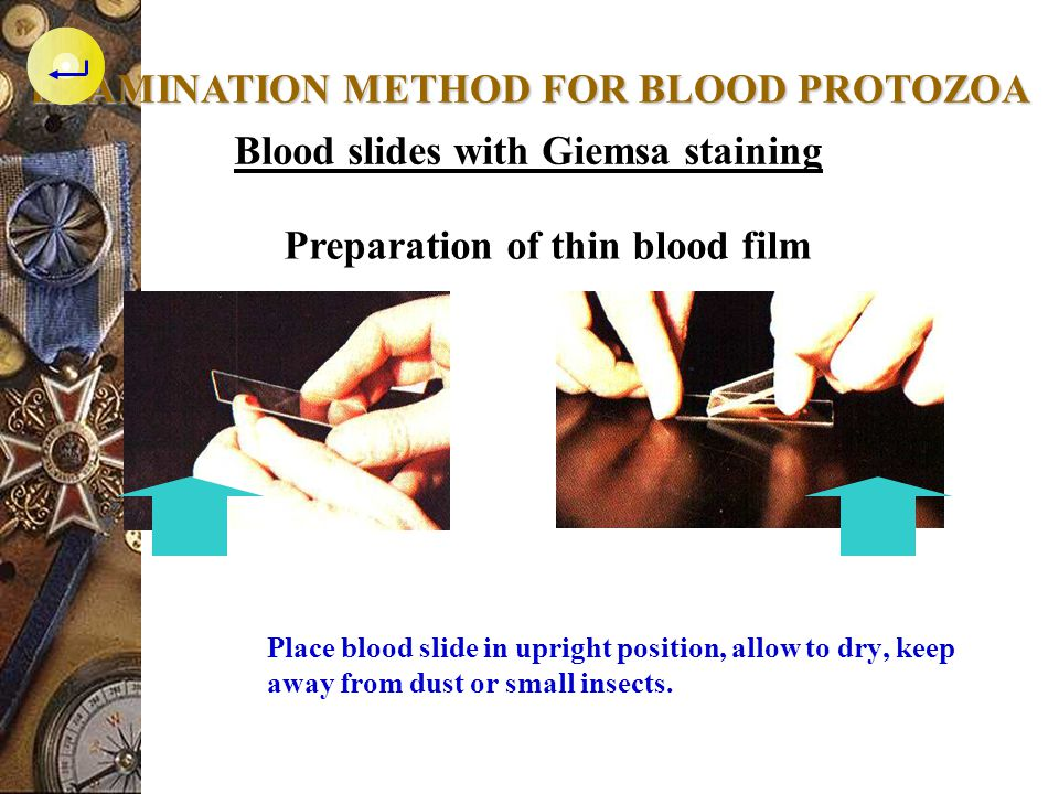 EXAMINATION METHOD FOR BLOOD PROTOZOA
