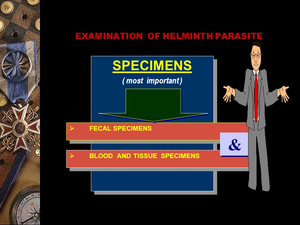 EXAMINATION OF HELMINTH PARASITE