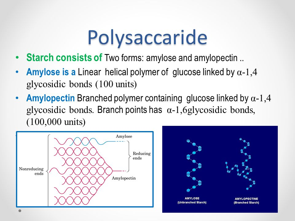 Polysaccaride Starch consists of Two forms: amylose and amylopectin ..