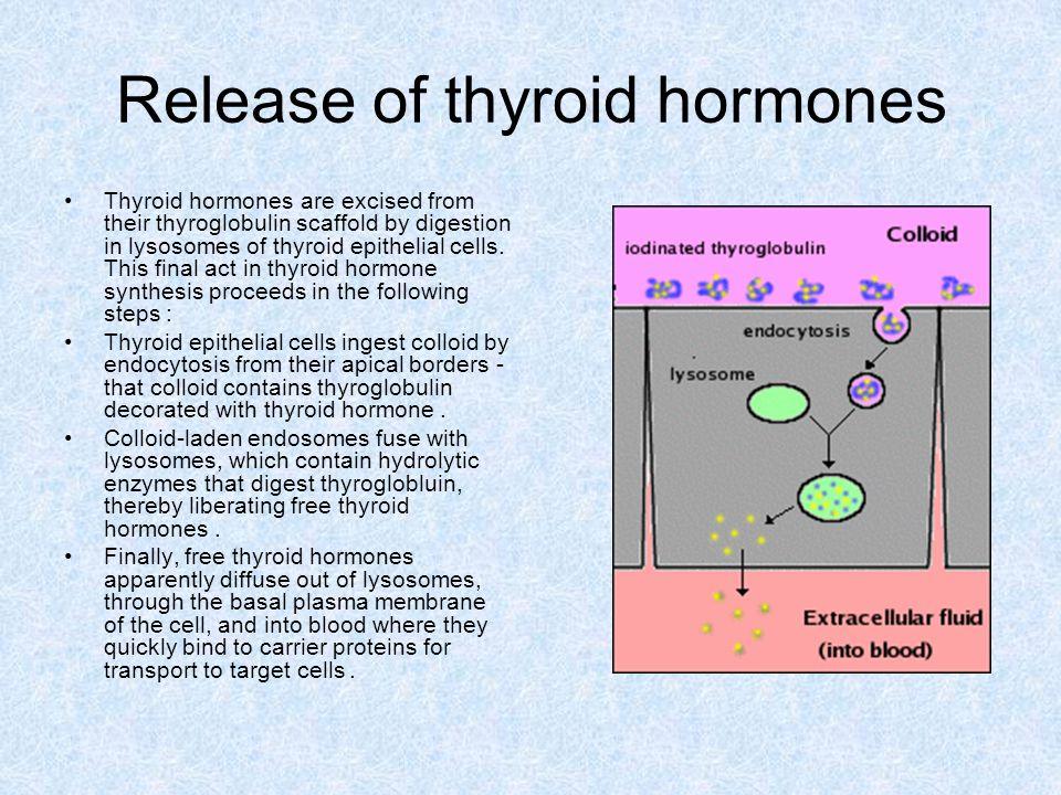 Release of thyroid hormones