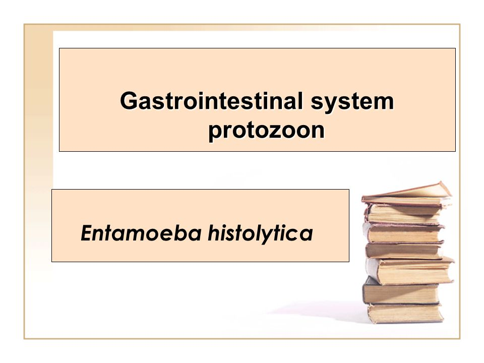 Gastrointestinal system protozoon