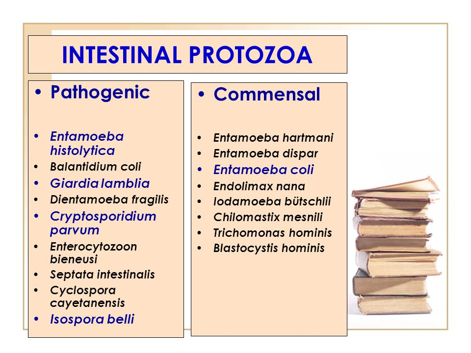 INTESTINAL PROTOZOA Pathogenic Commensal Entamoeba histolytica