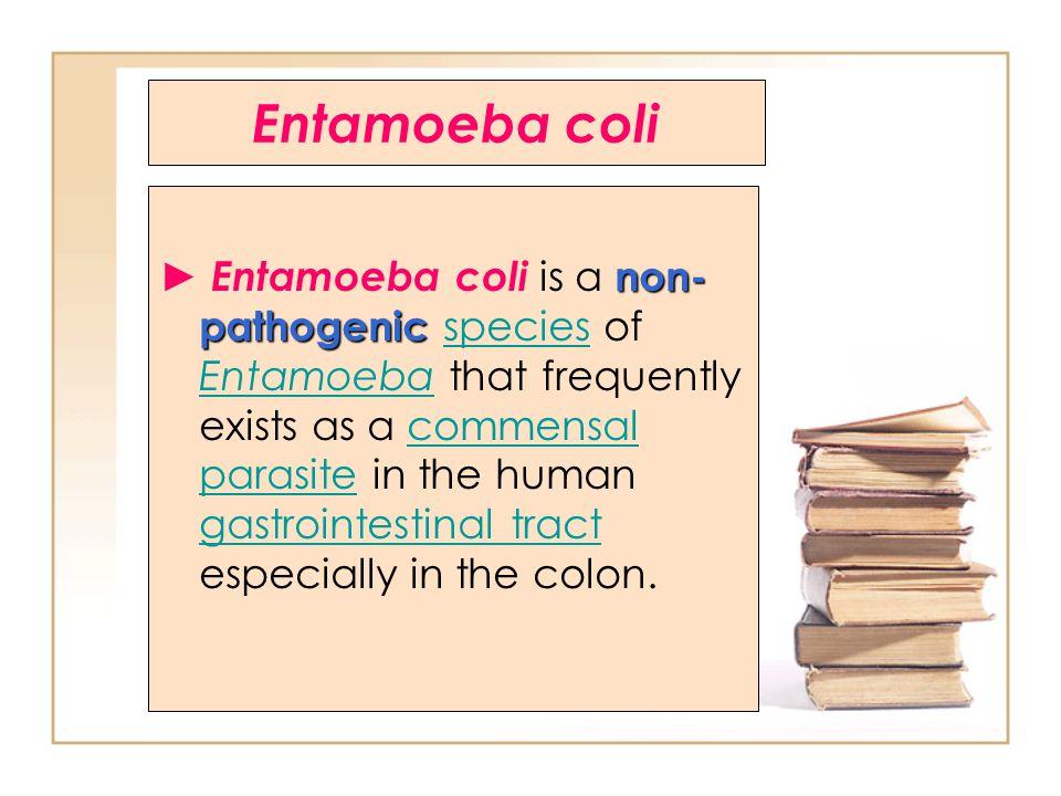 Entamoeba coli