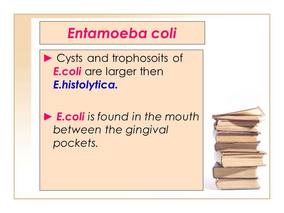 Entamoeba coli ► Cysts and trophosoits of E.coli are larger then E.histolytica.