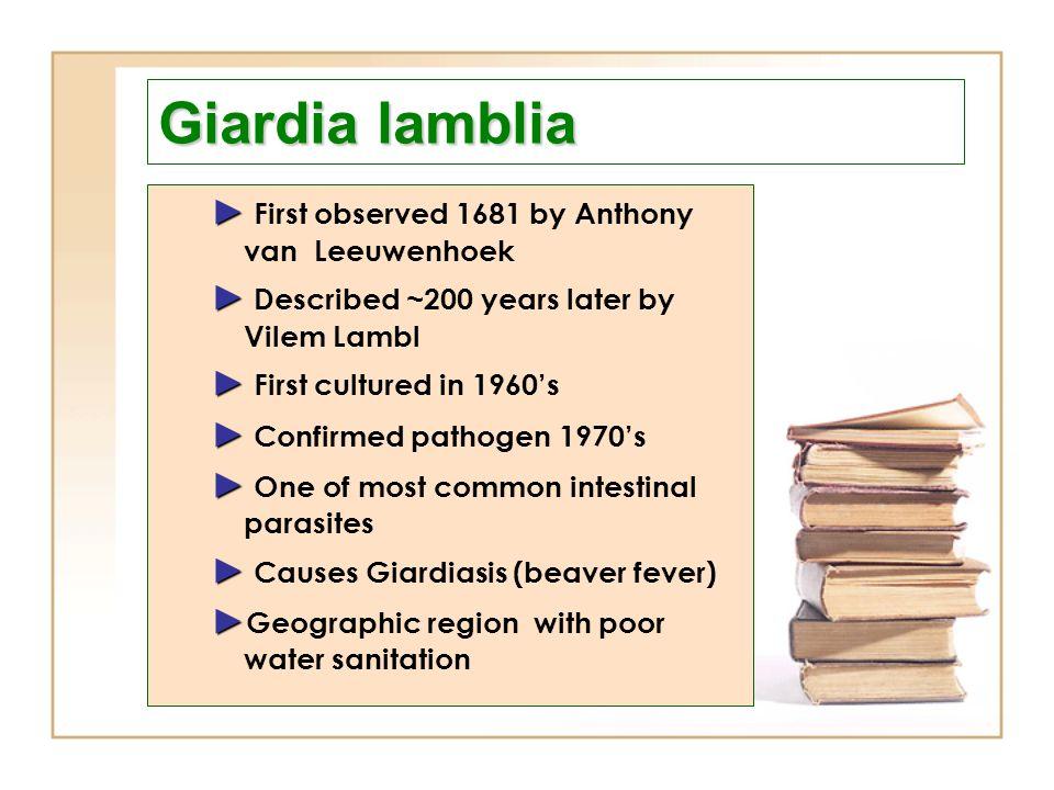 Giardia lamblia ► First observed 1681 by Anthony van Leeuwenhoek