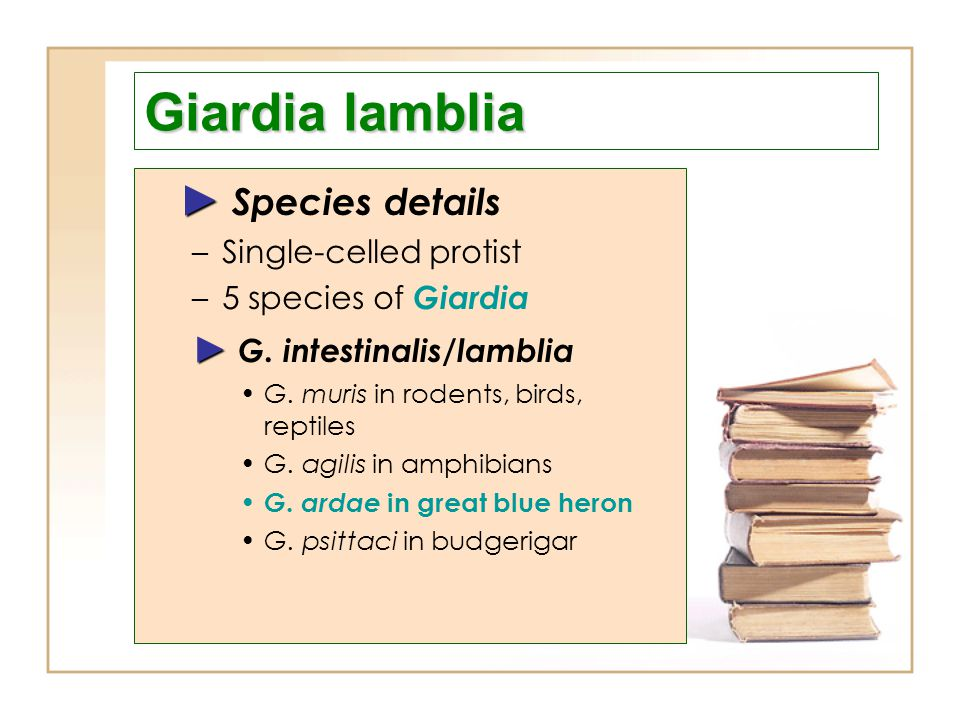 Giardia lamblia ► Species details ► G. intestinalis/lamblia