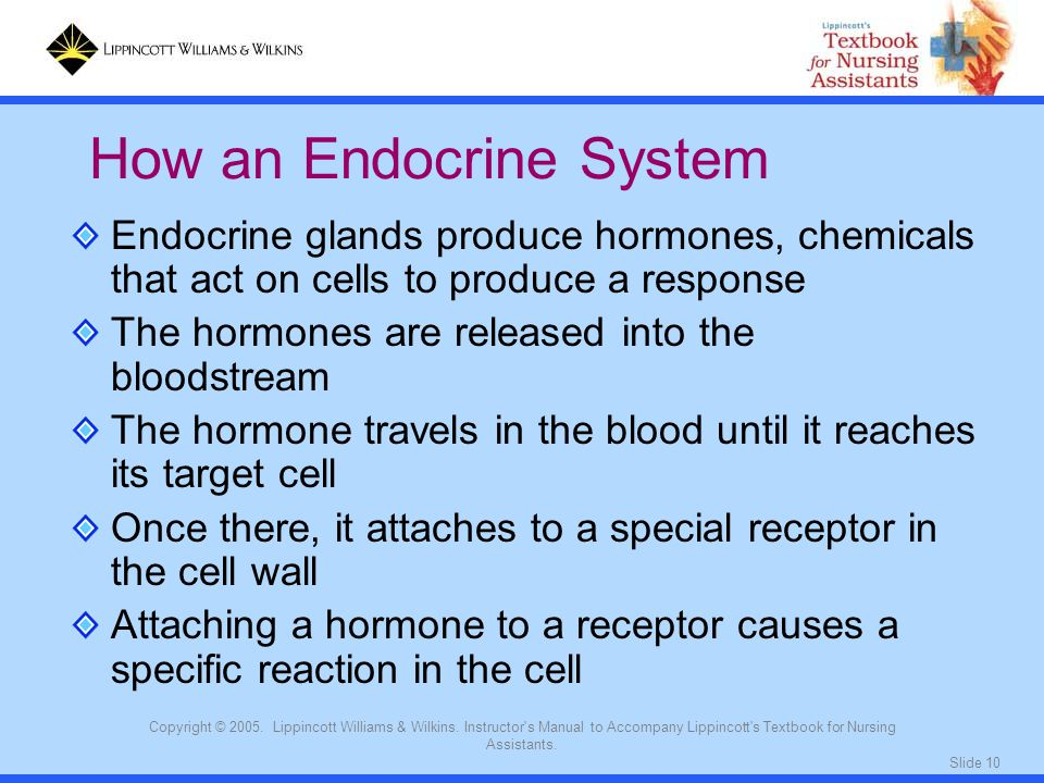 How an Endocrine System