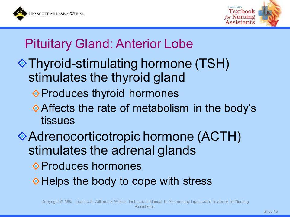 Pituitary Gland: Anterior Lobe