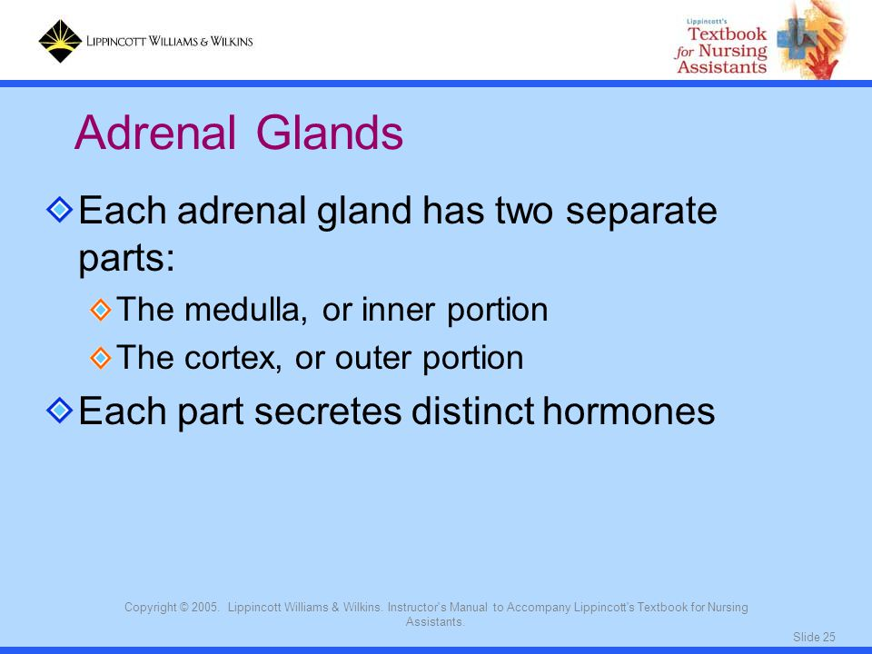 Adrenal Glands Each adrenal gland has two separate parts: