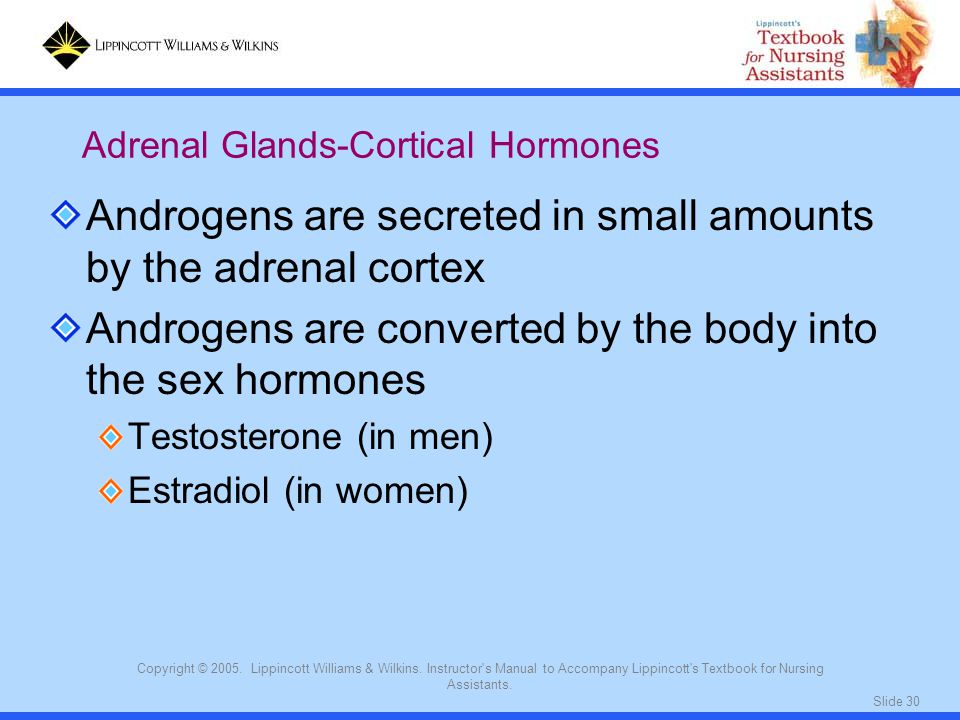 Androgens are secreted in small amounts by the adrenal cortex
