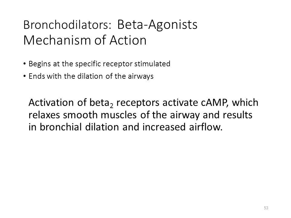 Bronchodilators: Beta-Agonists Mechanism of Action