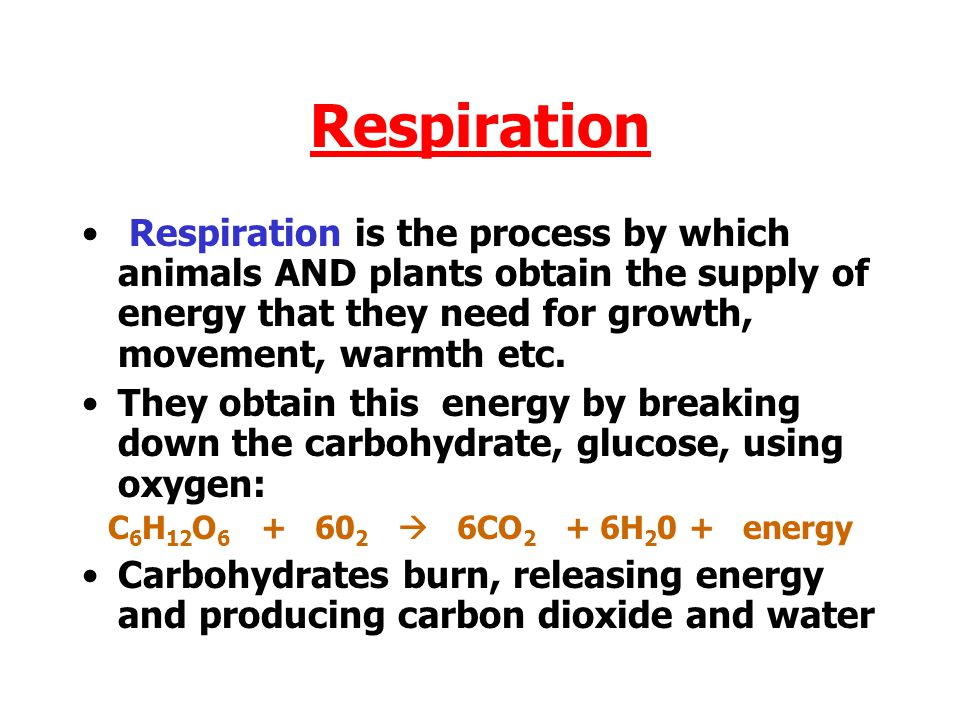 Respiration Respiration is the process by which animals AND plants obtain the supply of energy that they need for growth, movement, warmth etc.
