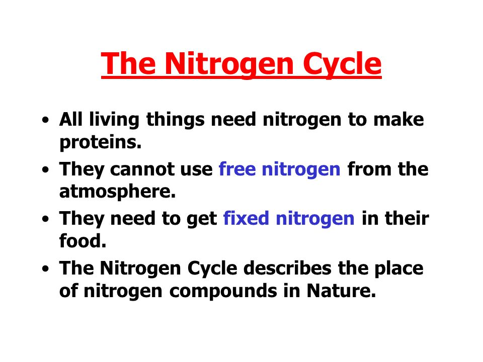 The Nitrogen Cycle All living things need nitrogen to make proteins.