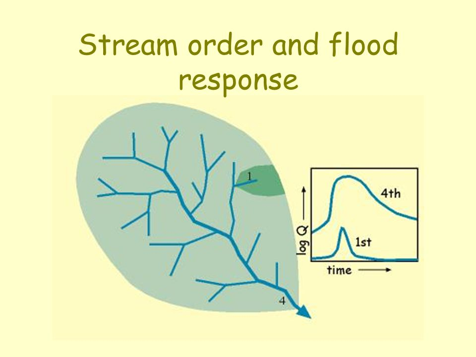 Stream order and flood response
