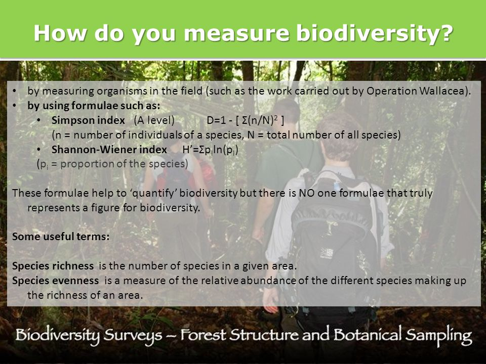 How do you measure biodiversity