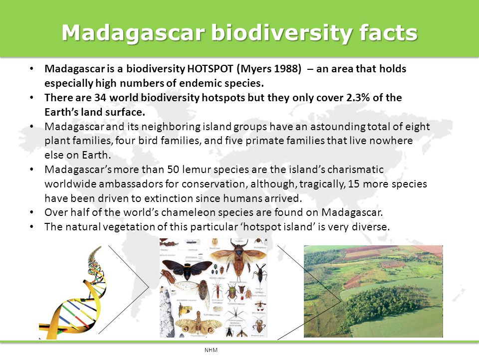 Madagascar biodiversity facts