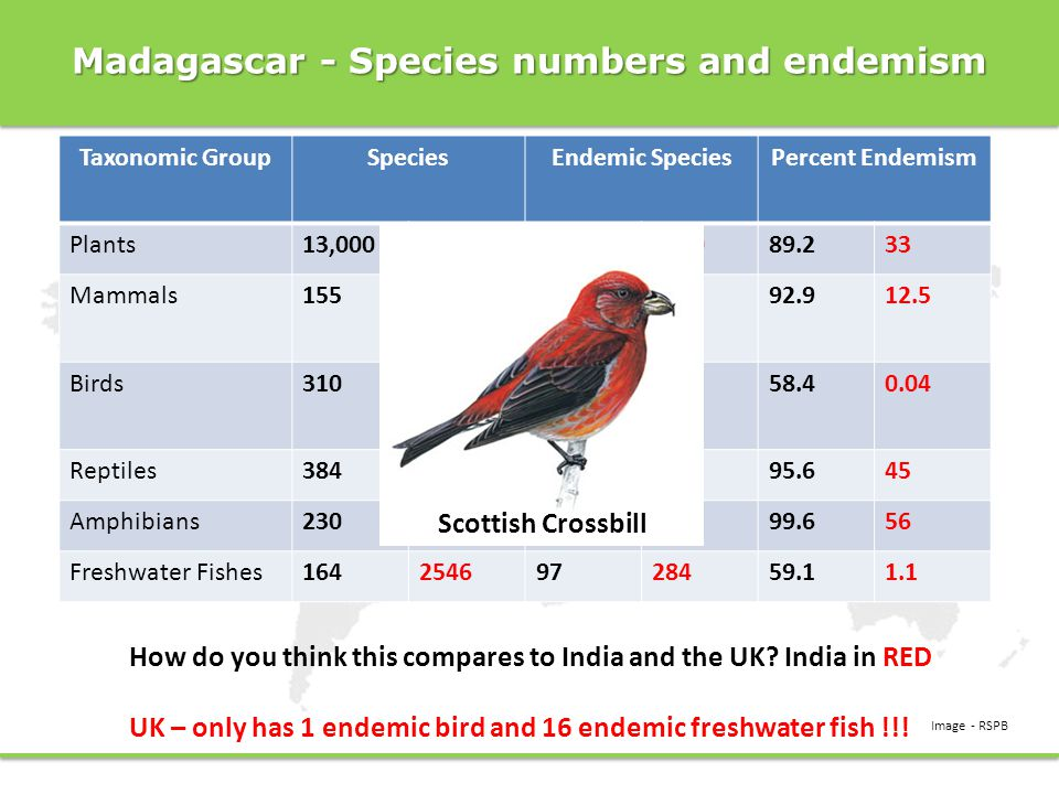 Madagascar - Species numbers and endemism