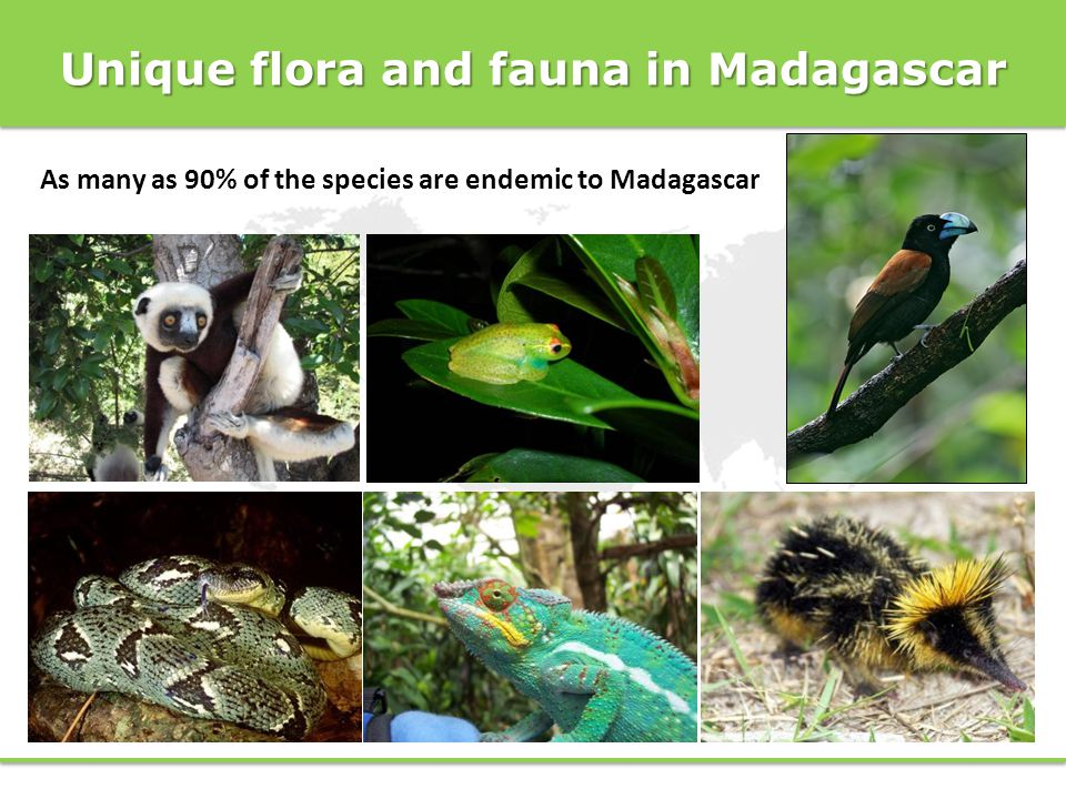 Unique flora and fauna in Madagascar