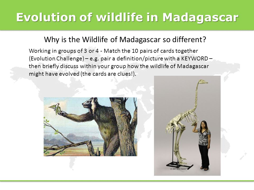 Evolution of wildlife in Madagascar