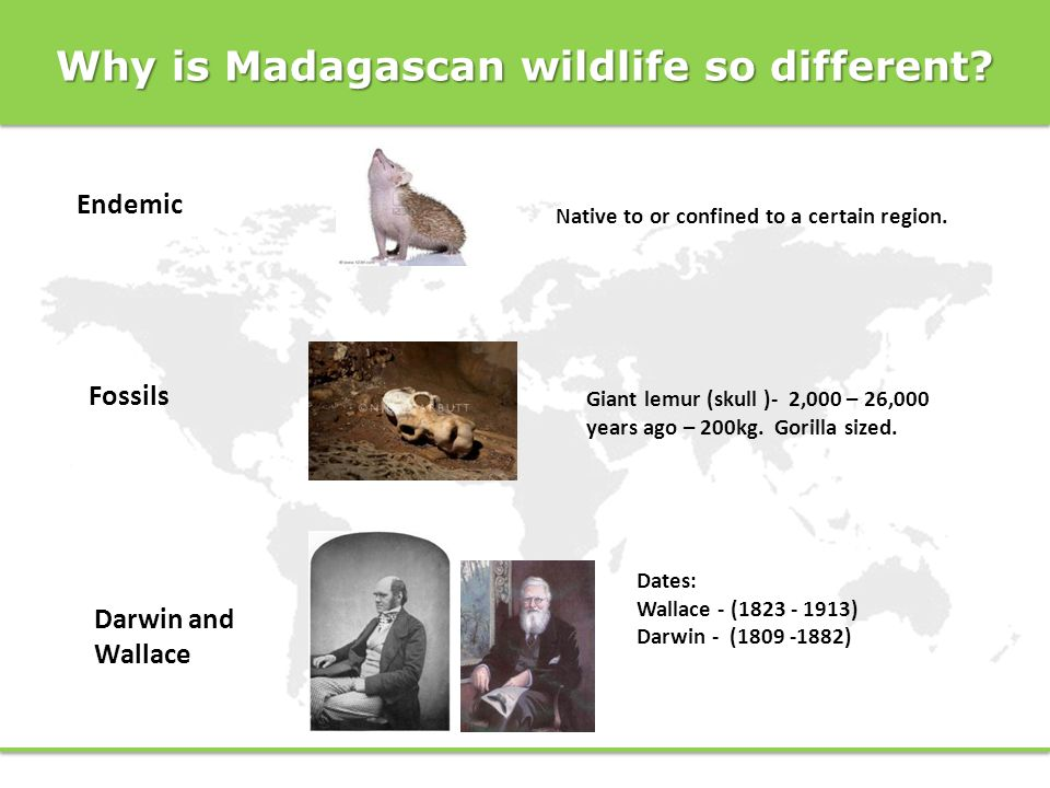 Why is Madagascan wildlife so different