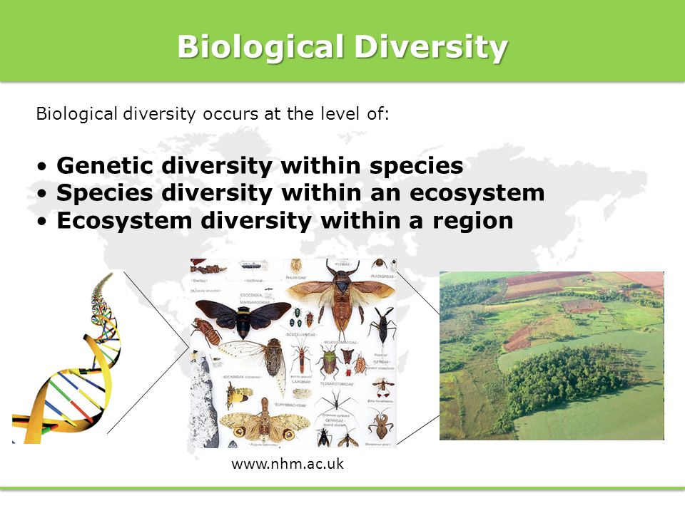 Biological Diversity Genetic diversity within species