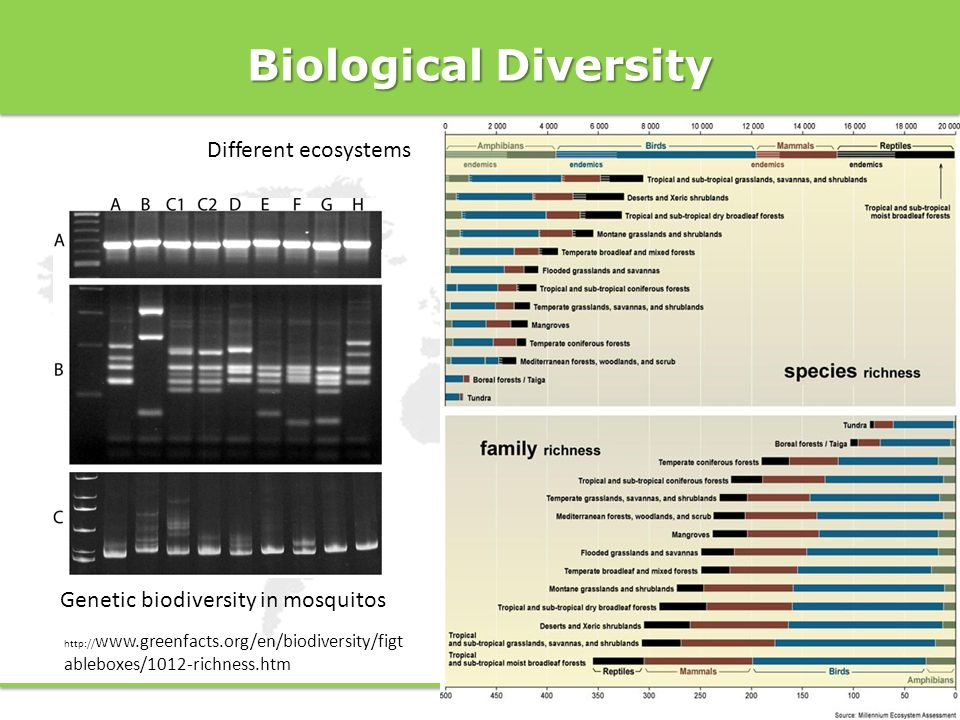 Biological Diversity Different ecosystems