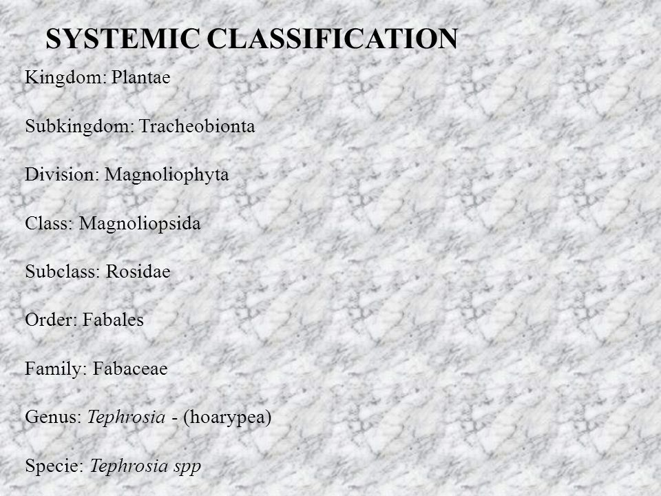 SYSTEMIC CLASSIFICATION