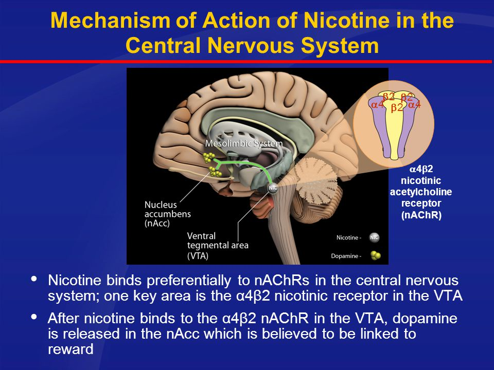 Mechanism of Action of Nicotine in the Central Nervous System