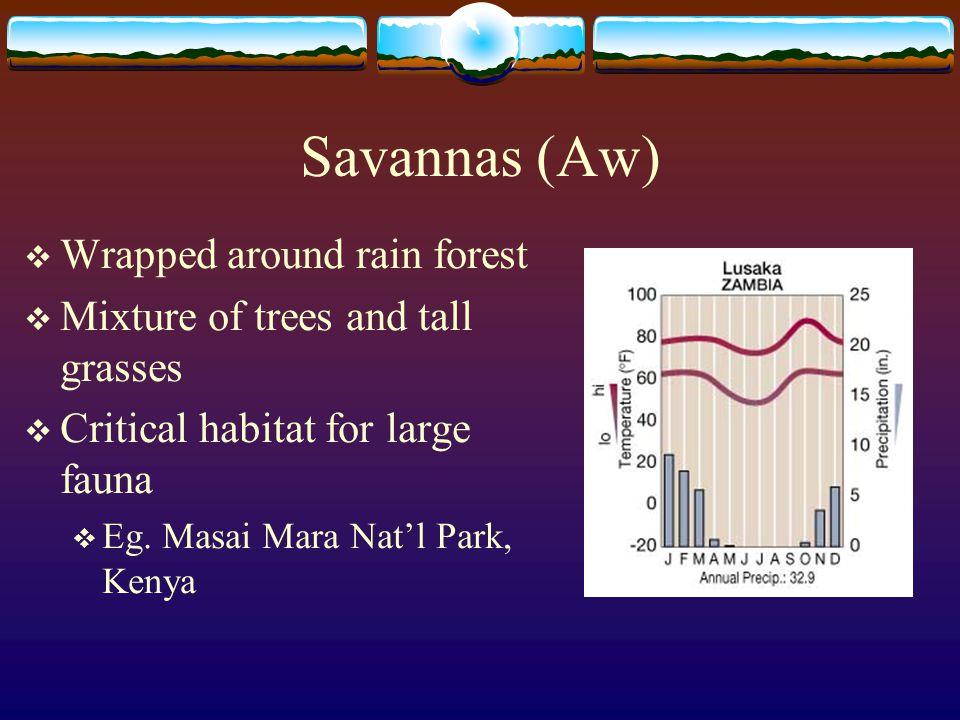Savannas (Aw) Wrapped around rain forest