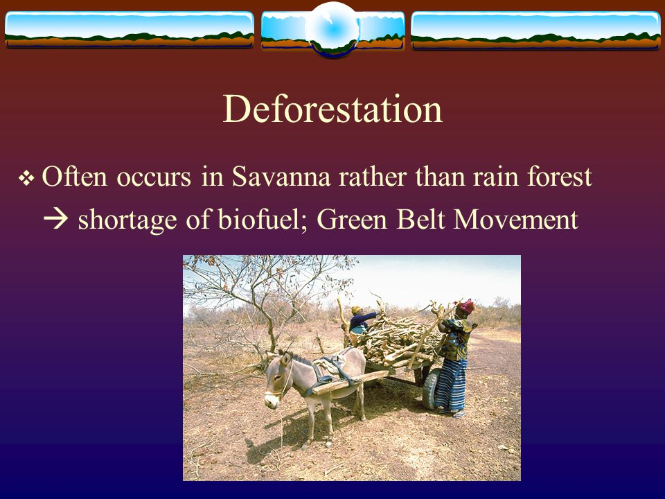 Deforestation Often occurs in Savanna rather than rain forest
