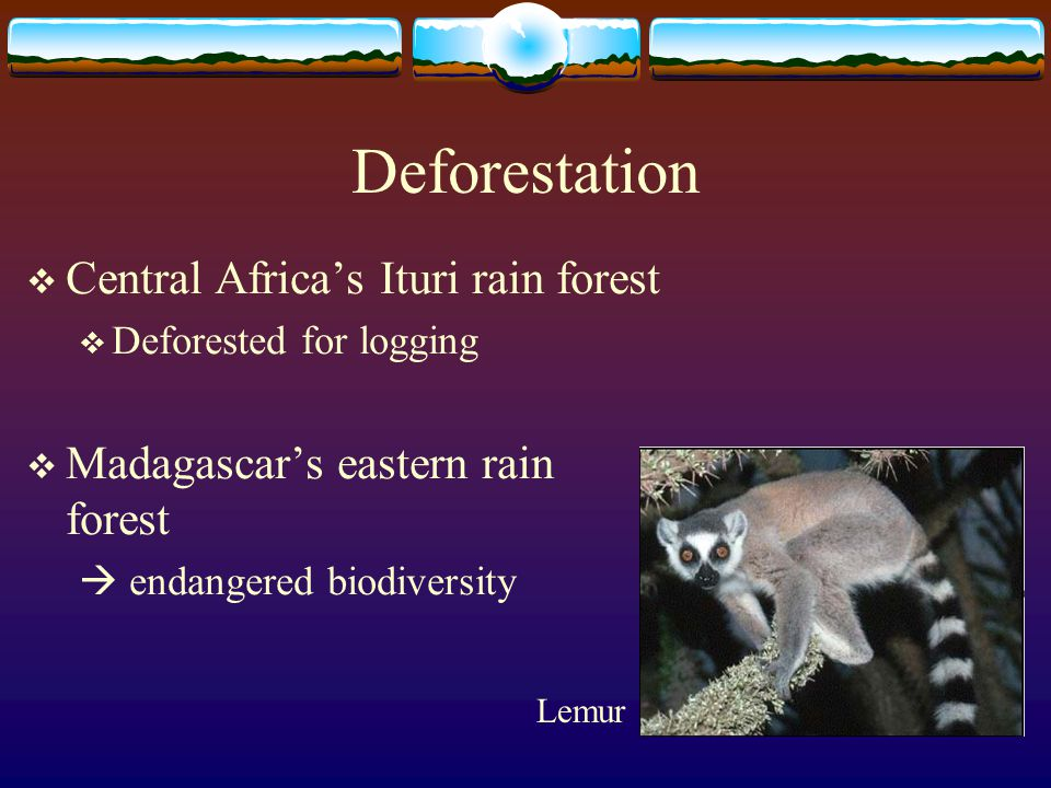 Deforestation Central Africa's Ituri rain forest