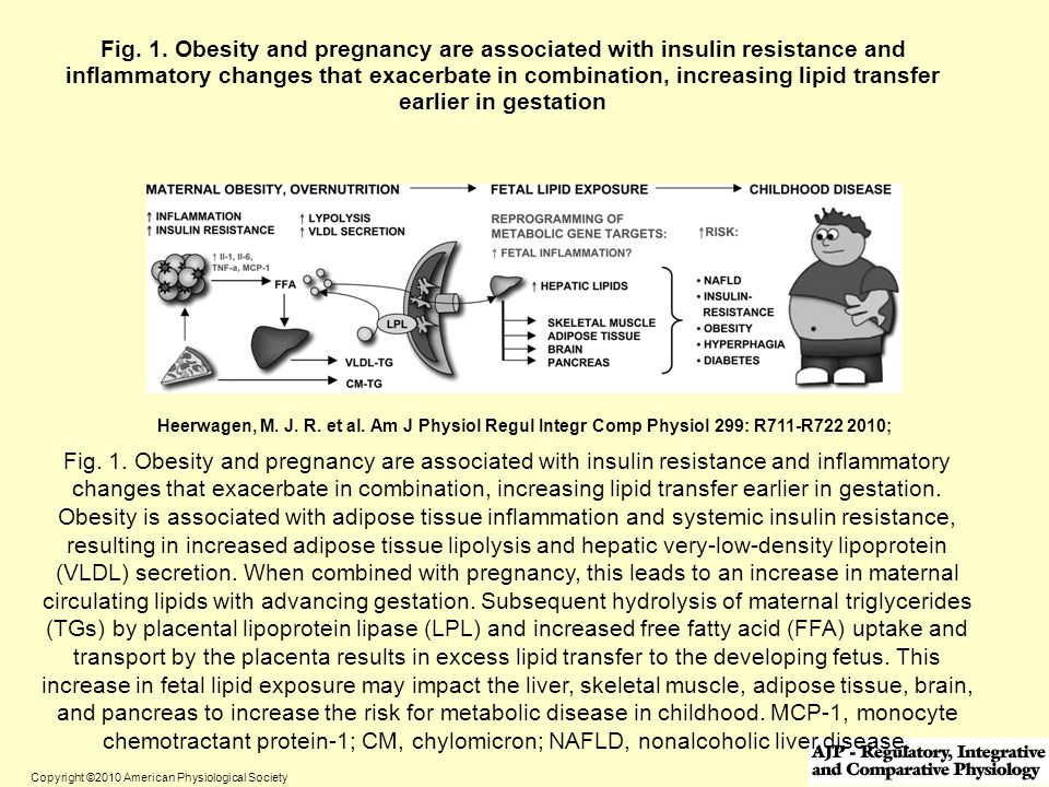 Fig. 1. Obesity and pregnancy are associated with insulin resistance and inflammatory changes that exacerbate in combination, increasing lipid transfer earlier in gestation