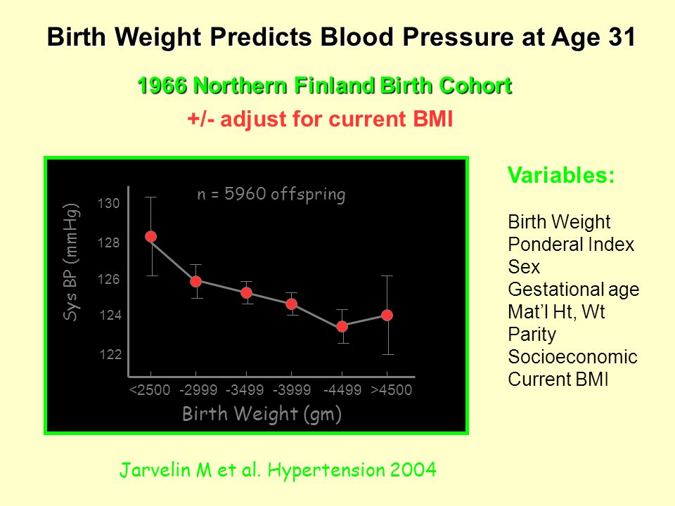 Birth Weight Predicts Blood Pressure at Age 31