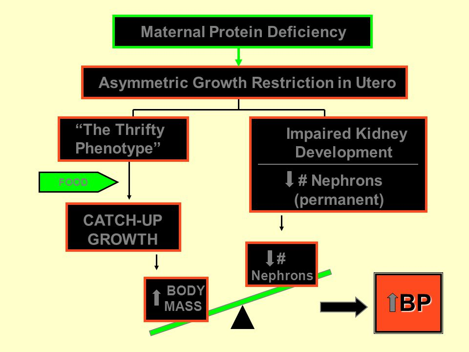 Asymmetric Growth Restriction in Utero