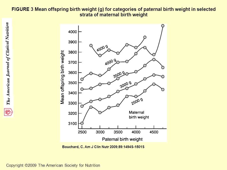 FIGURE 3 Mean offspring birth weight (g) for categories of paternal birth weight in selected strata of maternal birth weight