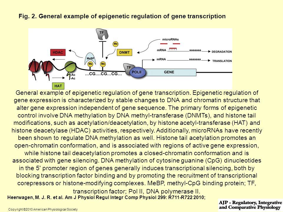 Fig. 2. General example of epigenetic regulation of gene transcription
