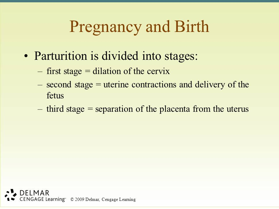 Pregnancy and Birth Parturition is divided into stages: