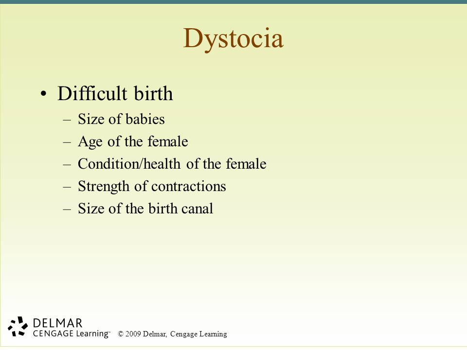 Dystocia Difficult birth Size of babies Age of the female