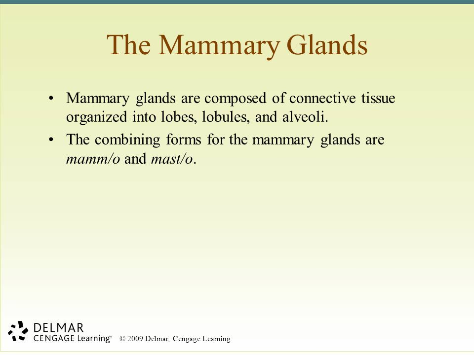 The Mammary Glands Mammary glands are composed of connective tissue organized into lobes, lobules, and alveoli.